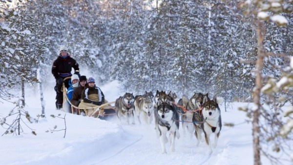 Tour to the Husky Park - Dog Sledging with Siberian Husky